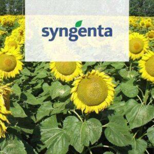 Гибриды подсолнечника от компании Syngenta (Сингента)
