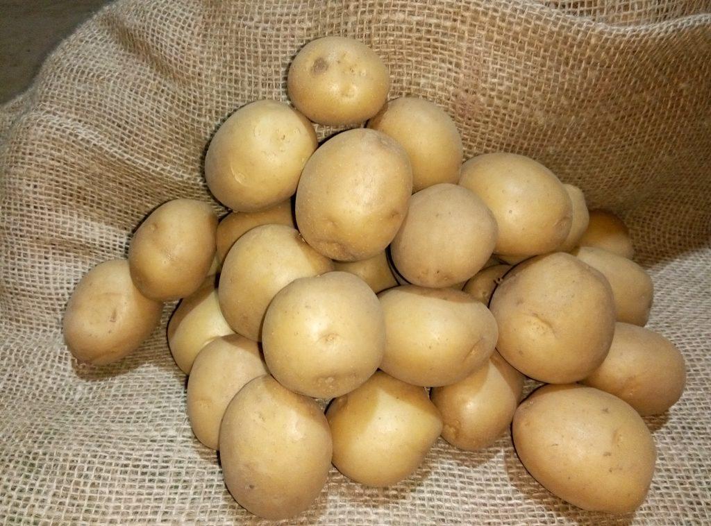 Характеристика и выращивание картофеля «Ривьера»