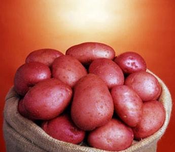 Как сохранить картофель до посадки