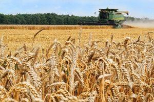 Микроудобрения для зерновых. Что предпочитает пшеничка?
