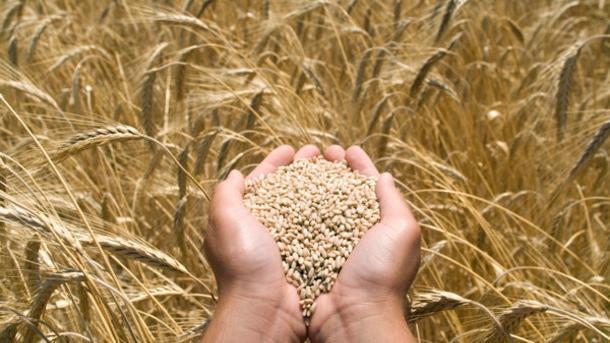 Как протравливать семена перед посадкой