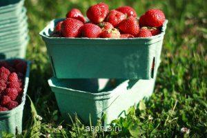 Влияние фунгицидов на готовую продукцию овощей и фруктов