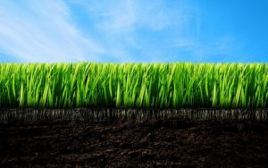 Вымывание азота из почвы