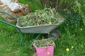 Борьба с сорняками в саду