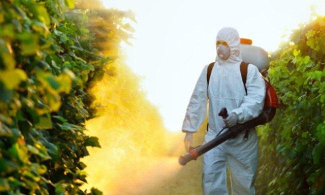 Всегда ли новые пестициды более эффективны