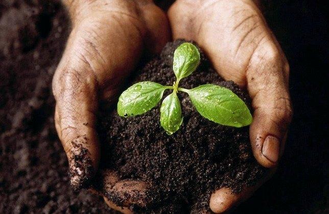Преимущества хелатных удобрений