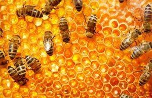 Правильные инсектициды для пчел