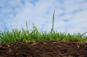 Влияние кислотности почвы на урожай