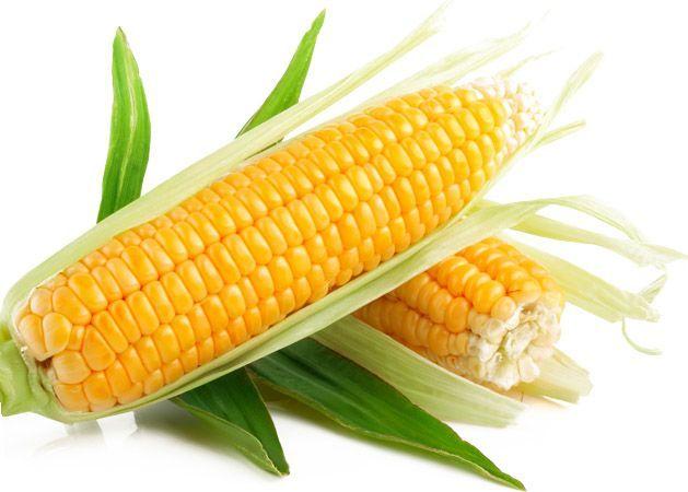 Стоит ли выращивать кукурузу?