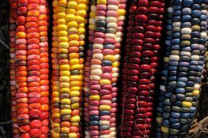 Значения микроэлементов для кукурузы