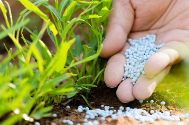 Сроки и способы внесений минеральных удобрений