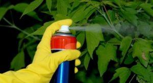 Применение инсектицидов и фунгицидов в сельском хозяйстве