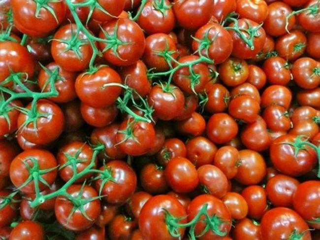 Рекомендации по выращиванию томатов