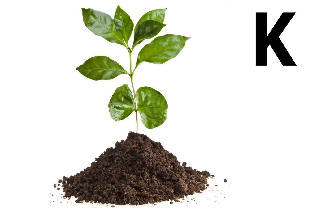 Роль калия в развитии растения
