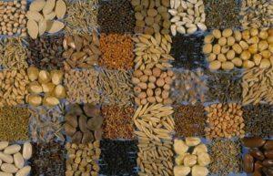 Где и какие семена покупают аграрии