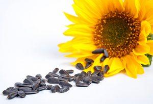 Как не купить поддельные семена подсолнечника