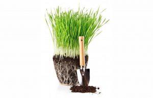 Потенциал корней: стимуляция роста корневой системы сельскохозяйственных культур