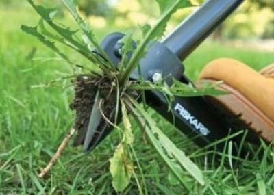Посевы, обработанные гербицидами, пострадали из-за глубокого их проникновения в почву вследствие дождей.