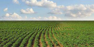 Эффективная защита картофеля от сорняков