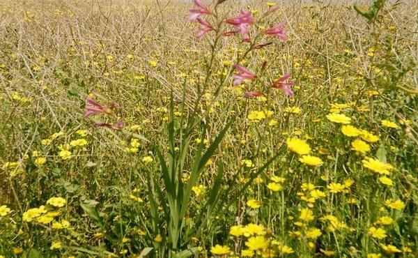 Методы оценки засоренности поля