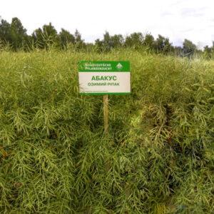 [:ru]Семена рапса Абакус[:ua]Насіння ріпаку Абакус[:]