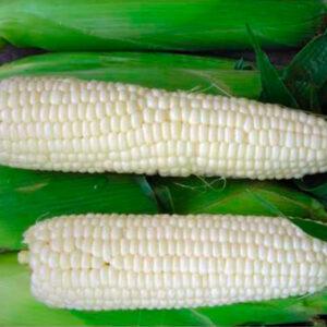 [:ru]Сахарная кукуруза Белый Кролик[:ua]Цукрова кукурудза Білий Кролик[:]