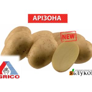Семенной картофель Аризона