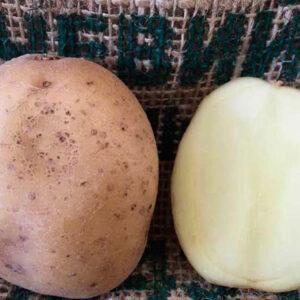 Семенной картофель Банба
