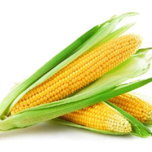 Цукрова кукурудза Солодка Мрія
