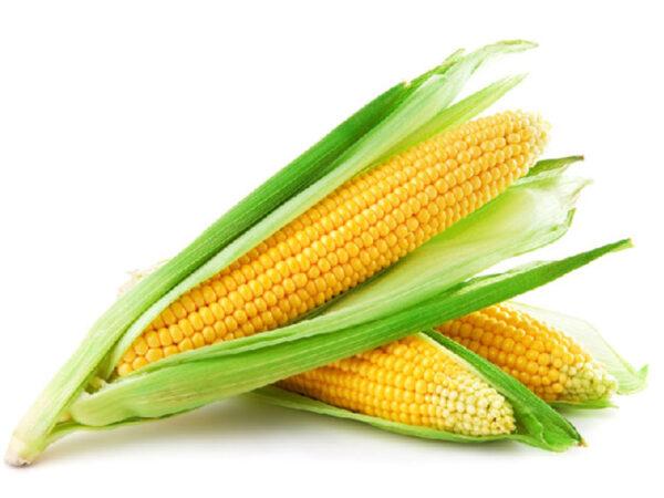Сахарная кукуруза Сладкая Мечта