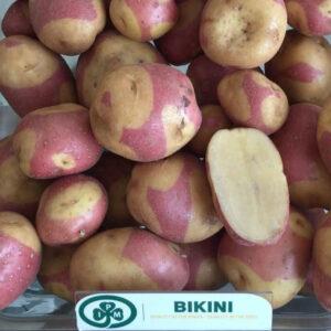Семенной картофель Бикини