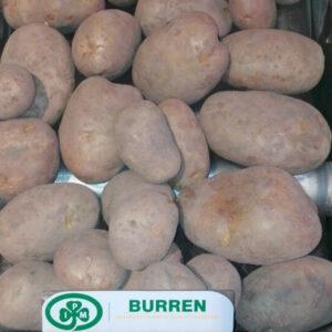 [:ru]Семенной картофель Бюррен[:ua]Насіннєва картопля Бюррен[:]
