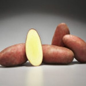 [:ru]Семенной картофель Дельфине (Германия)[:ua]Насіннєва картопля Дельфіне (Німеччина)[:]