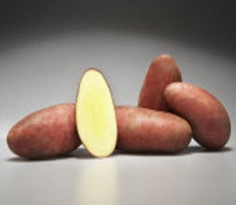 Семенной картофель Дельфине (Германия)