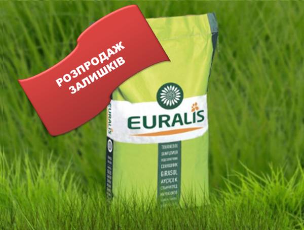 Семена подсолнечника EC Аркадия