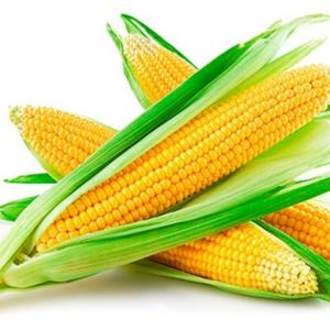 Семена кукурузы Ферум