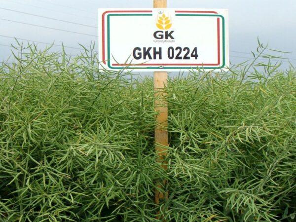 Семена рапса ГКХ 0224