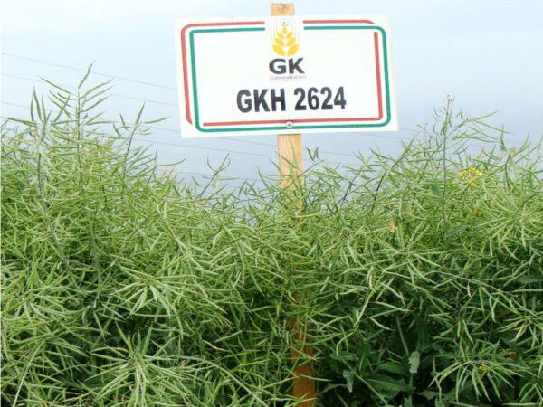 Семена рапса ГКХ 2624