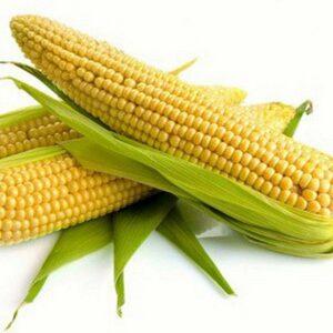 [:ru]Семена кукурузы НК Канзас[:ua]Насіння кукурудзи НК Канзас[:]