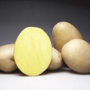 [:ru]Семенной картофель Кристел Германия[:ua]Насіннєва картопля Крістел Німеччина[:]