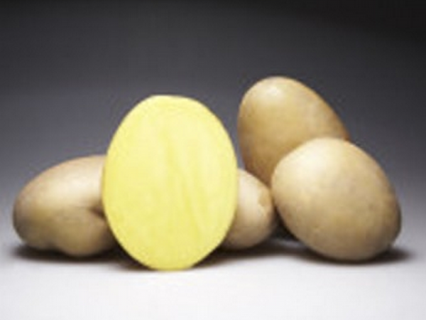 Семенной картофель Кристел Германия