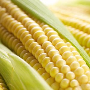 Семена кукурузы ЛГ 30315 (LG 30315)