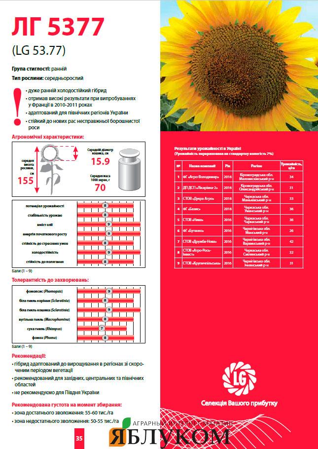Семена подсолнечника ЛГ 5377