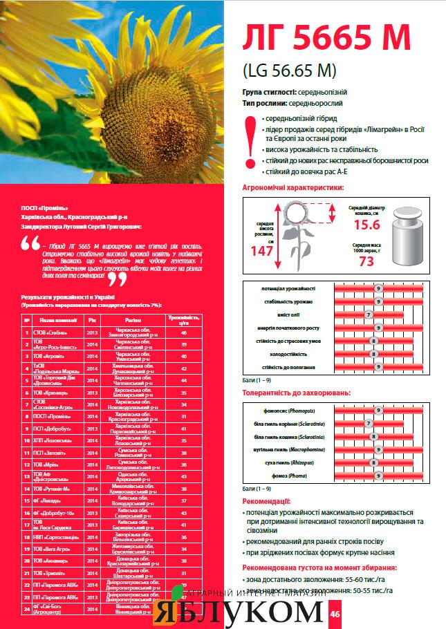Семена подсолнечника ЛГ 5665 М (LG 5665 M)