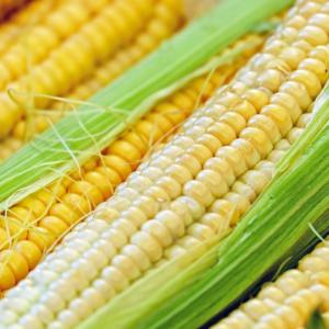 [:ru]Семена кукурузы ЛГ 3285 (LG 3285)[:ua]Насіння кукурудзи ЛГ 3285 (LG 3285)[:]