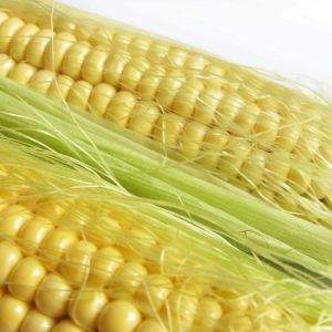[:ru]Семена кукурузы ЕС Лаймс[:ua]Насіння кукурудзи ЕС Лаймс[:]