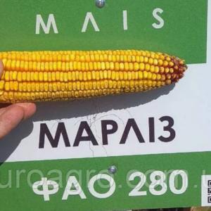 Семена кукурузы Марлиз