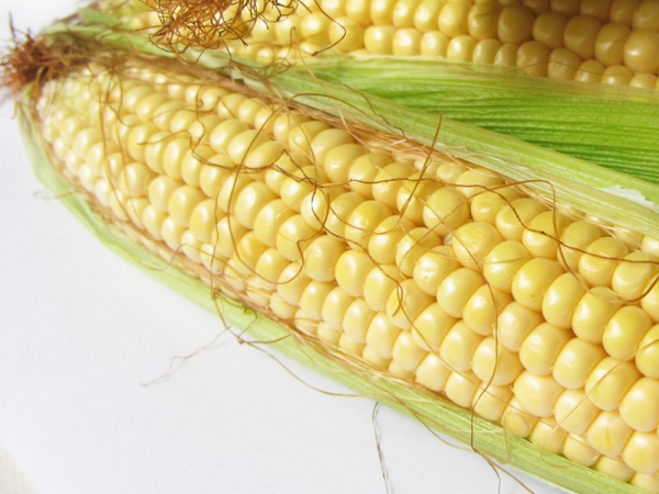 Семена кукурузы Мас 37.В