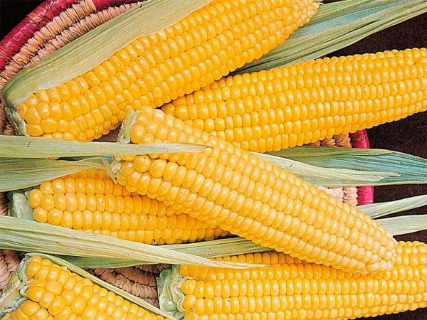 Сахарная кукуруза Мраморная F1