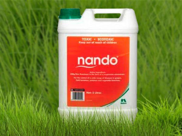 Нандо 500